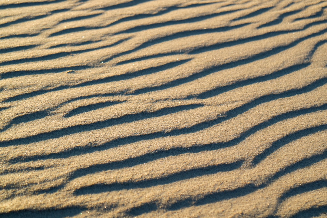 A zebra standing in the sand